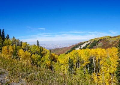 The sandstone Book Cliffs stand in stark contrast to the vibrant Aspens